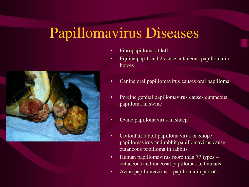 Papillomavirus Diseases