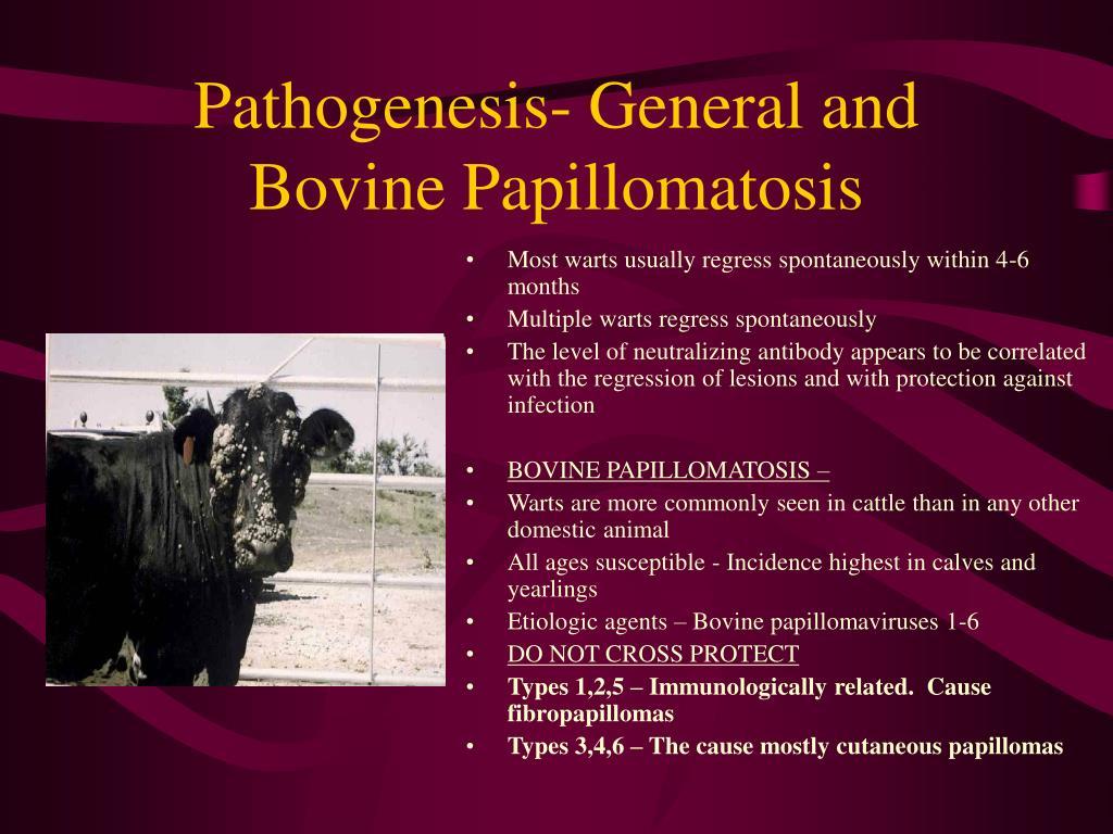 Pathogenesis- General and Bovine Papillomatosis