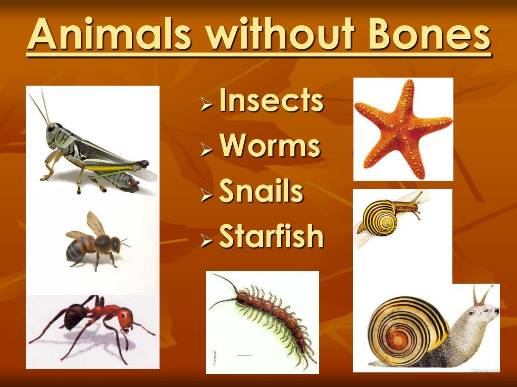 Ppt animals grow and change by denise carroll powerpoint for Fish without bones