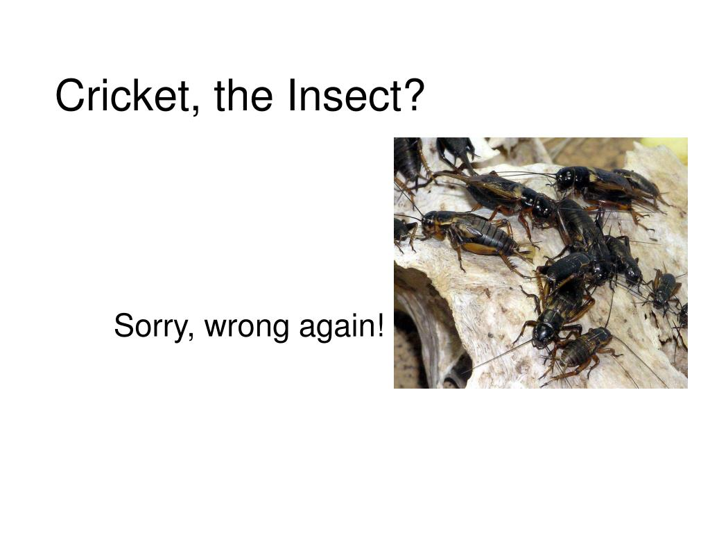 Cricket, the Insect?