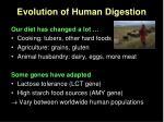 evolution of human digestion