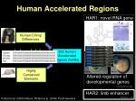 human accelerated regions