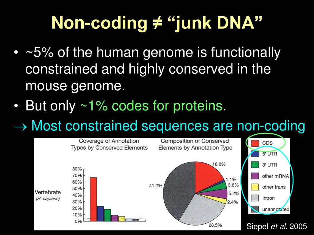 "Non-coding ≠ ""junk DNA"""