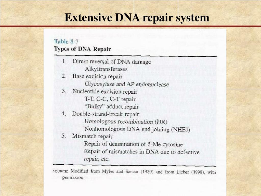 Extensive DNA repair system
