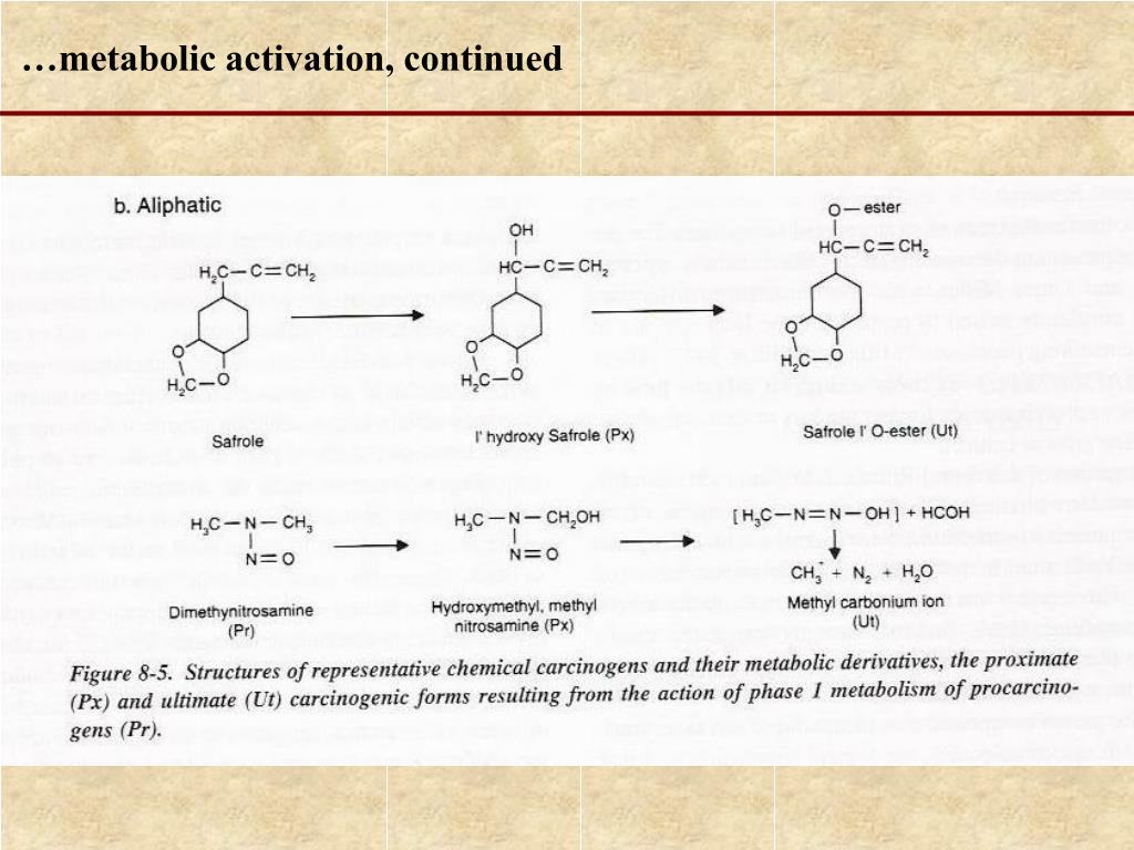 …metabolic activation, continued