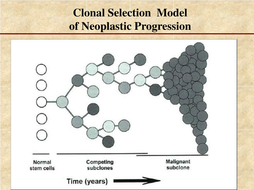 Clonal Selection  Model