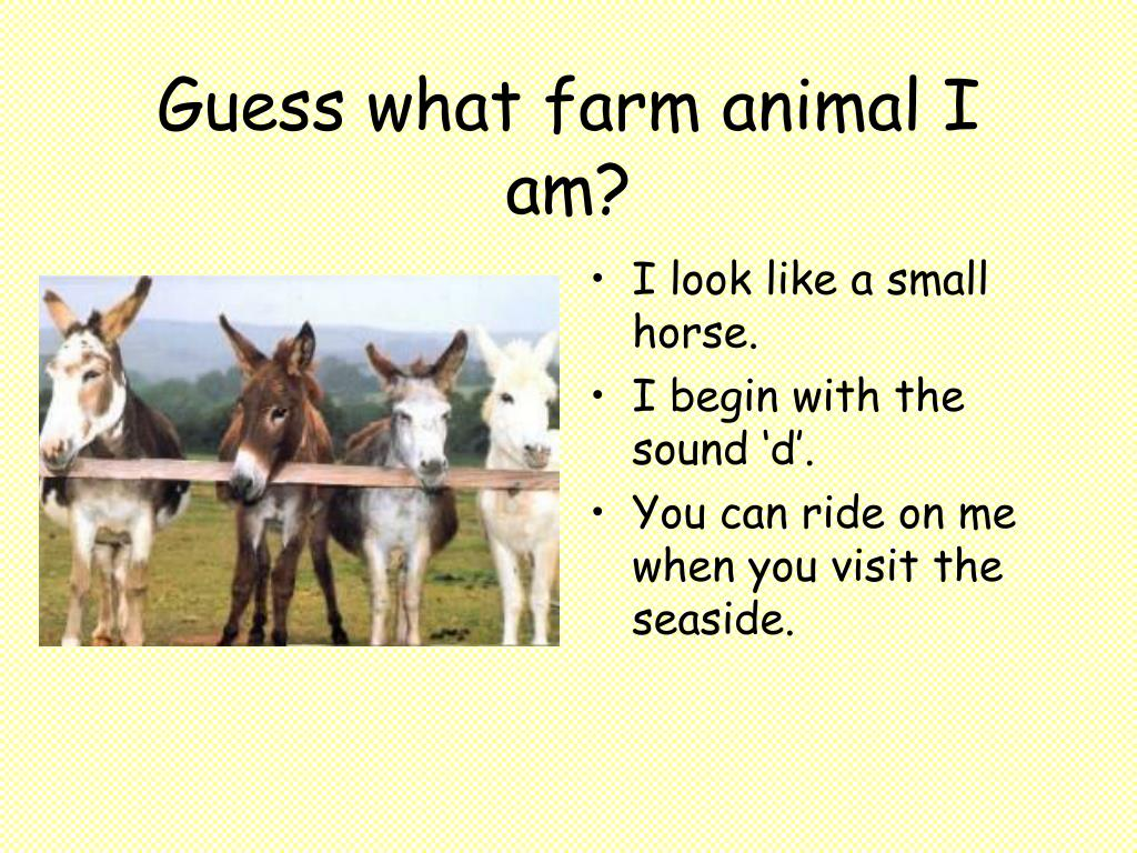 Guess what farm animal I am?