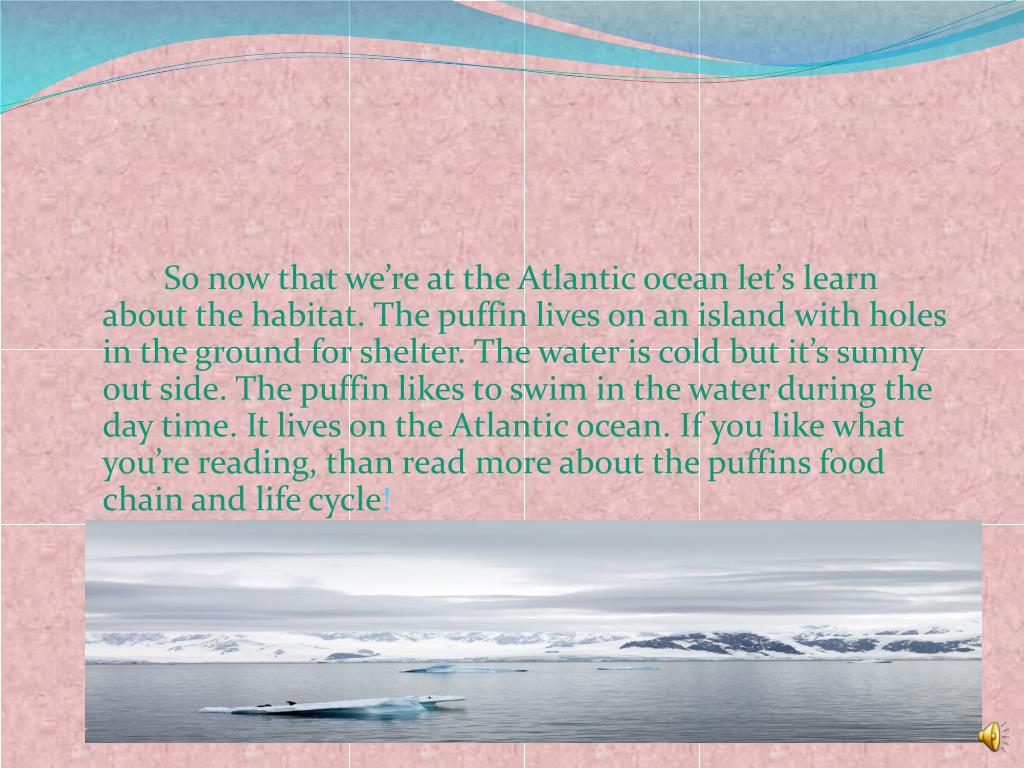 So now that we're at the Atlantic ocean let's learn about the habitat. The puffin lives on an island with holes in the ground for shelter. The water is cold but it's sunny out side. The puffin likes to swim in the water during the day time. It lives on the Atlantic ocean. If you like what you're reading, than read more about the puffins food chain and life cycle