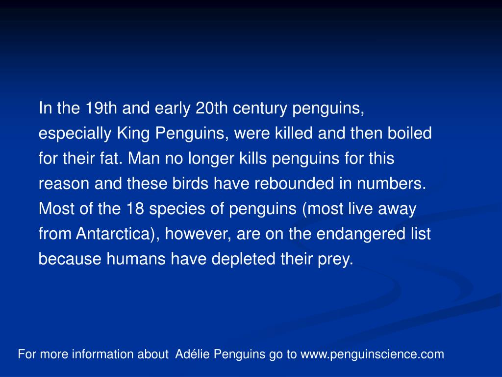 In the 19th and early 20th century penguins, especially King Penguins, were killed and then boiled for their fat. Man no longer kills penguins for this reason and these birds have rebounded in numbers. Most of the 18 species of penguins (most live away from Antarctica), however, are on the endangered list because humans have depleted their prey.