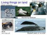 living things on land
