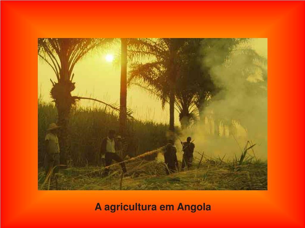 A agricultura em Angola
