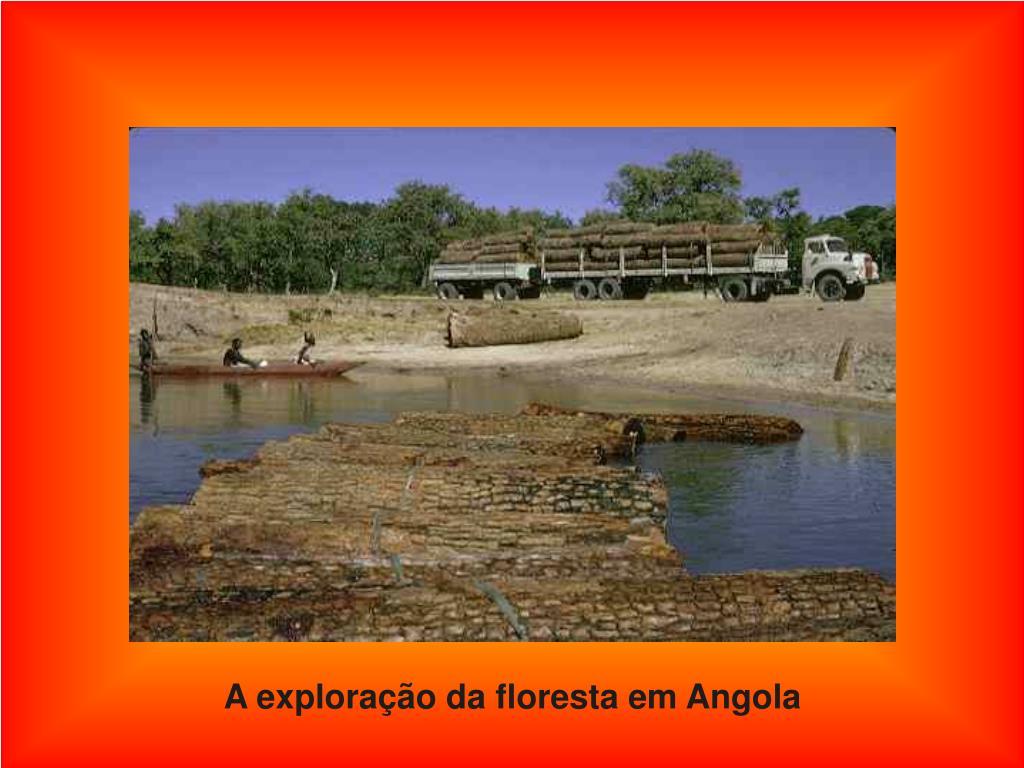 A exploração da floresta em Angola