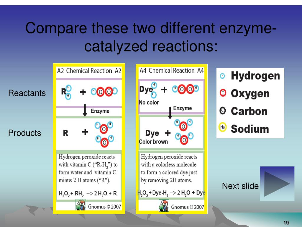 Compare these two different enzyme-catalyzed reactions: