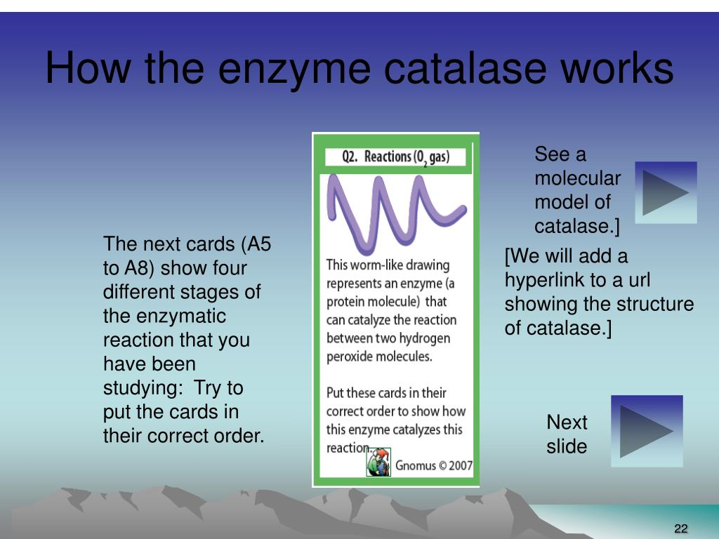 How the enzyme catalase works