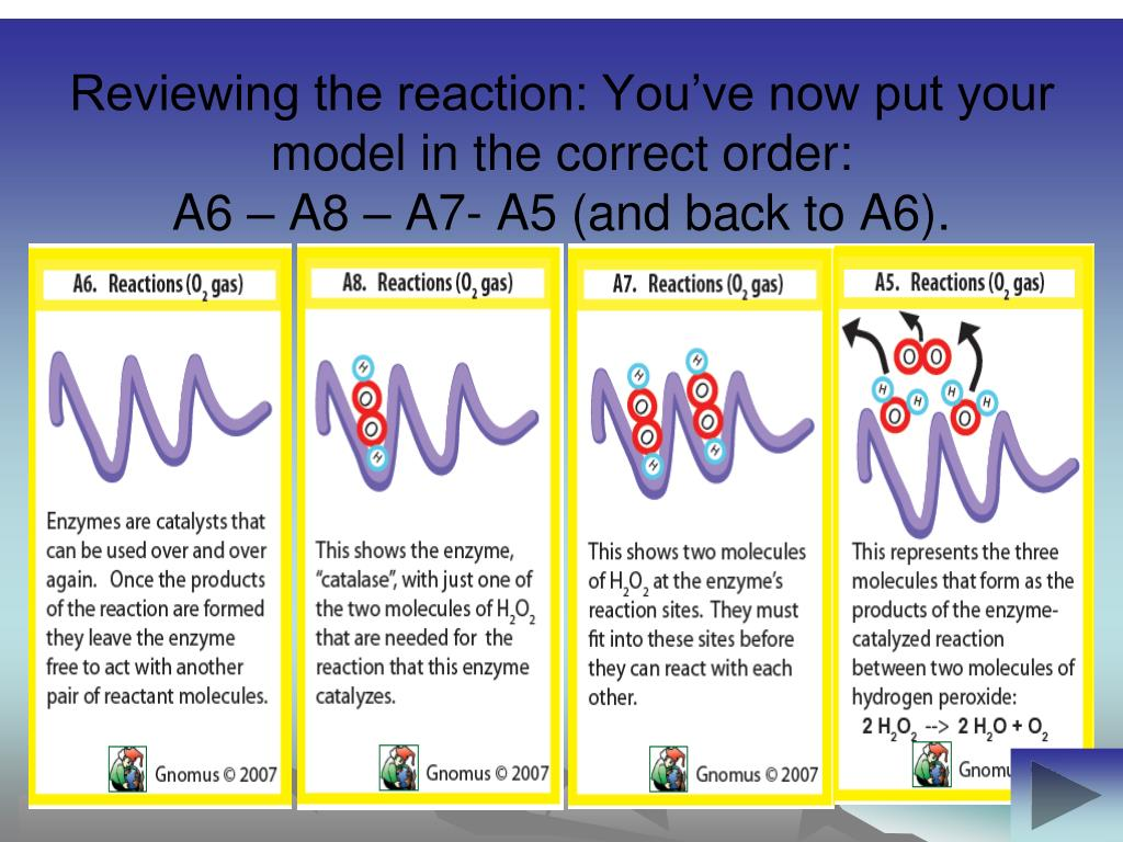 Reviewing the reaction: