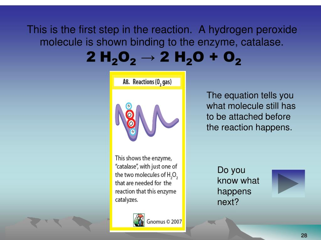 This is the first step in the reaction.  A hydrogen peroxide molecule is shown binding to the enzyme, catalase.