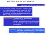fisiopatolog a del hipotiroidismo24