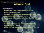 atlantic cod14