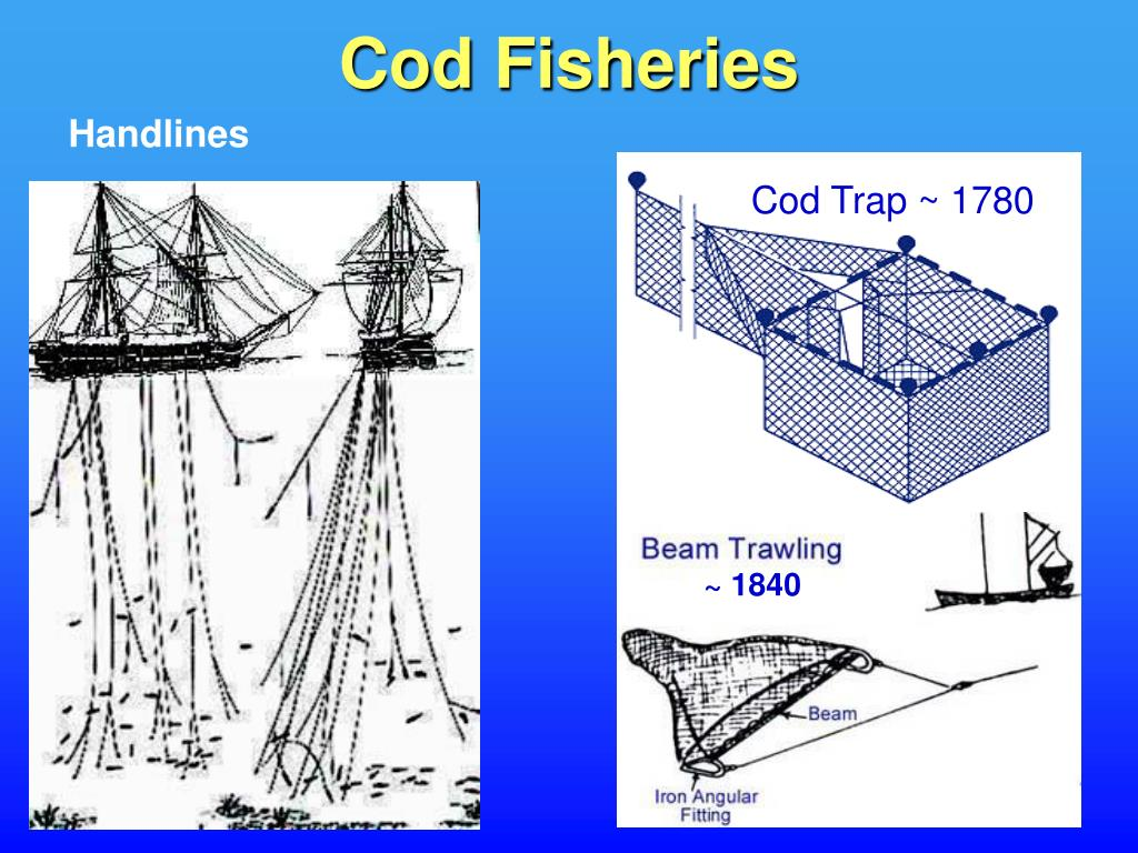 Cod Fisheries