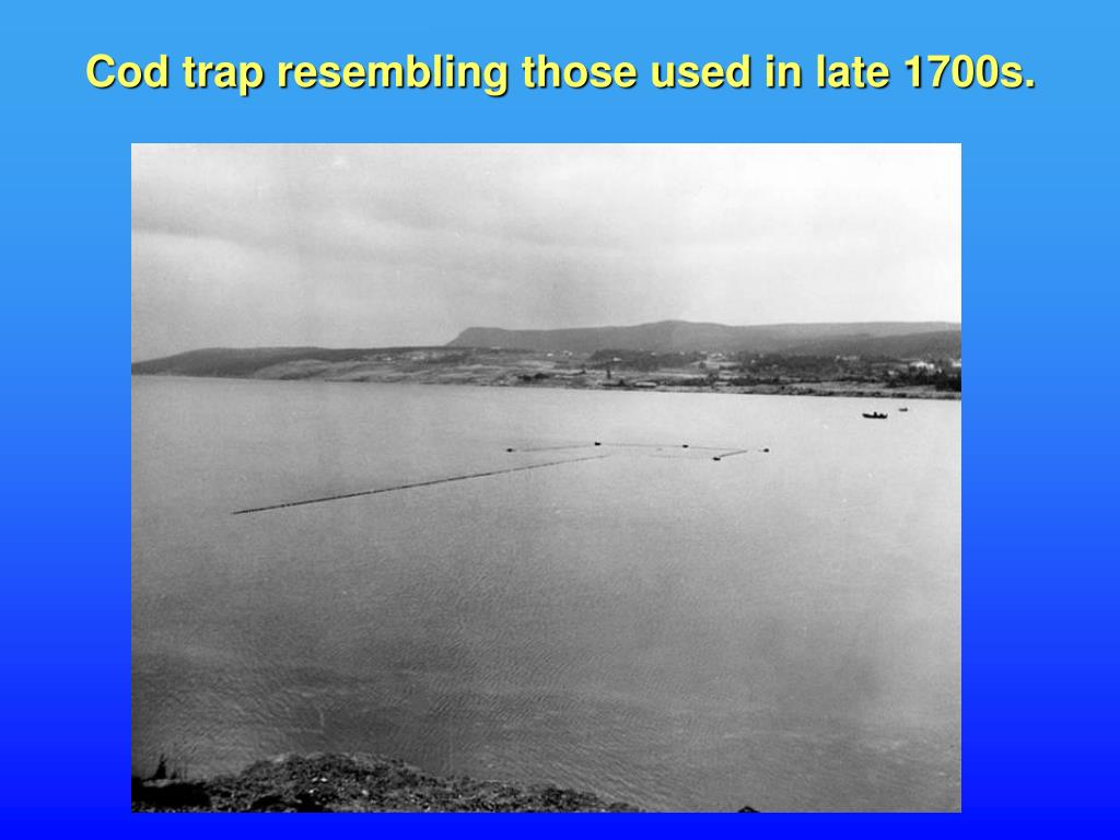 Cod trap resembling those used in late 1700s.