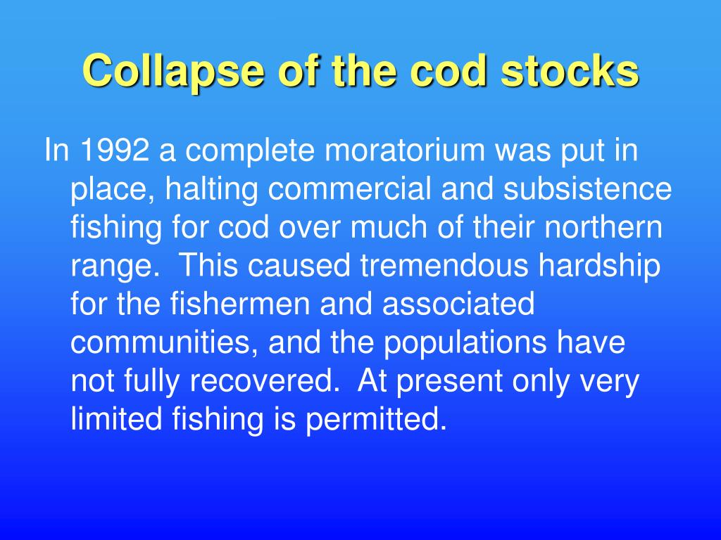 Collapse of the cod stocks