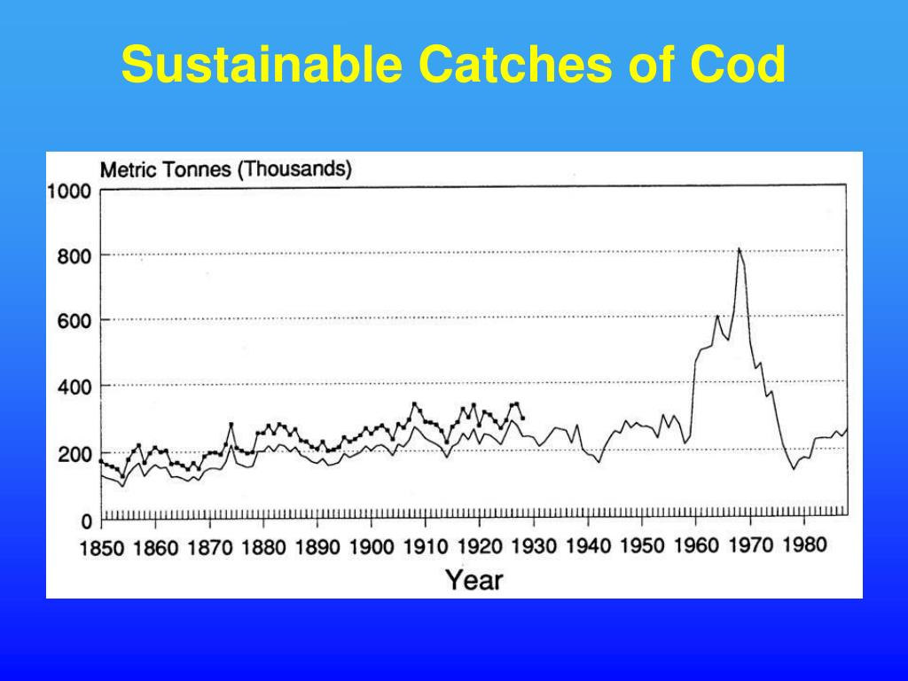 Sustainable Catches of Cod