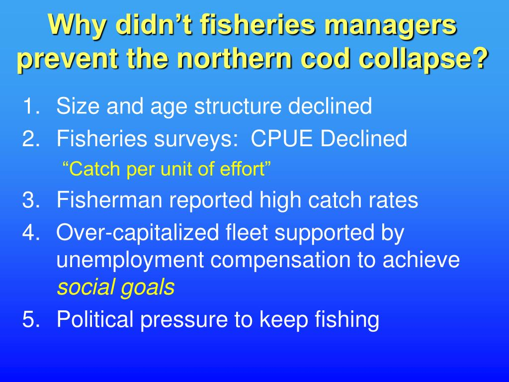 Why didn't fisheries managers prevent the northern cod collapse?