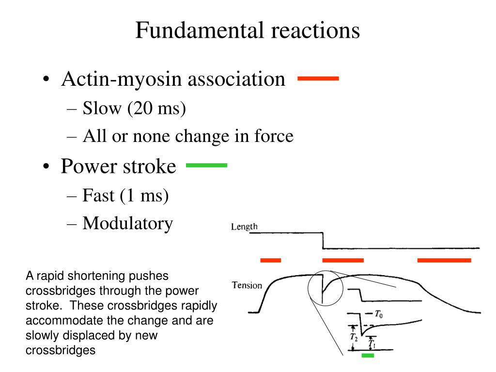 Fundamental reactions