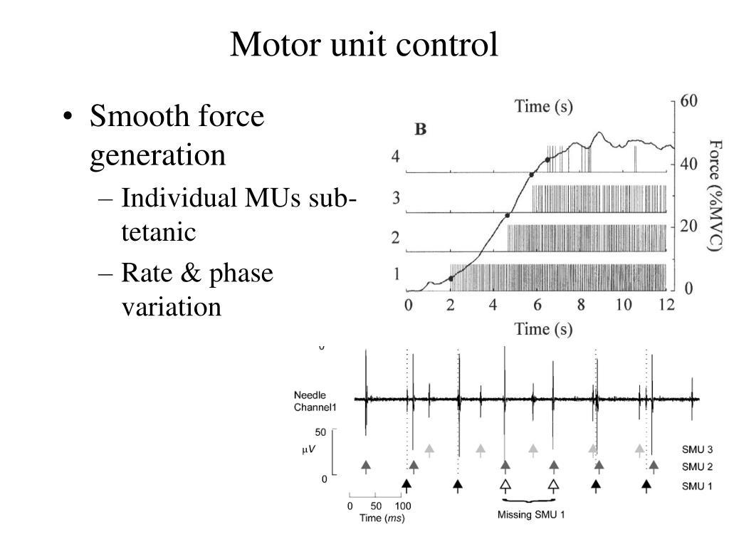 Motor unit control