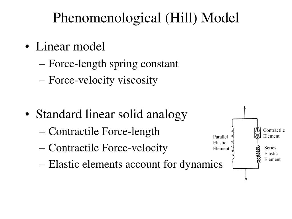 Phenomenological (Hill) Model