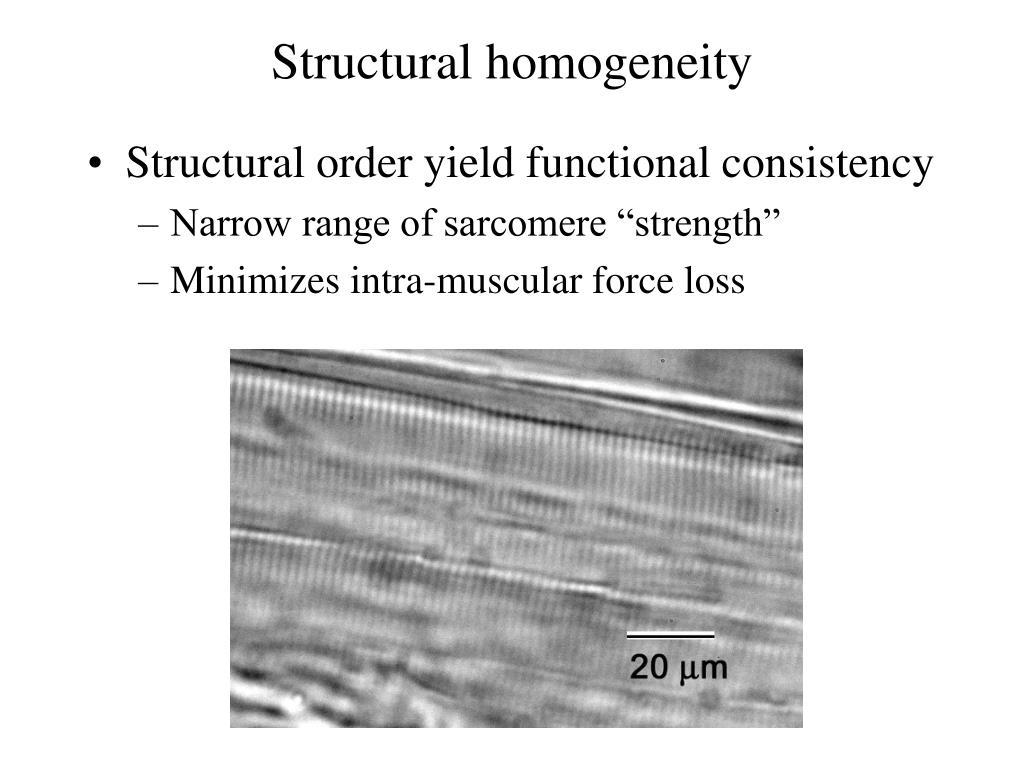 Structural homogeneity