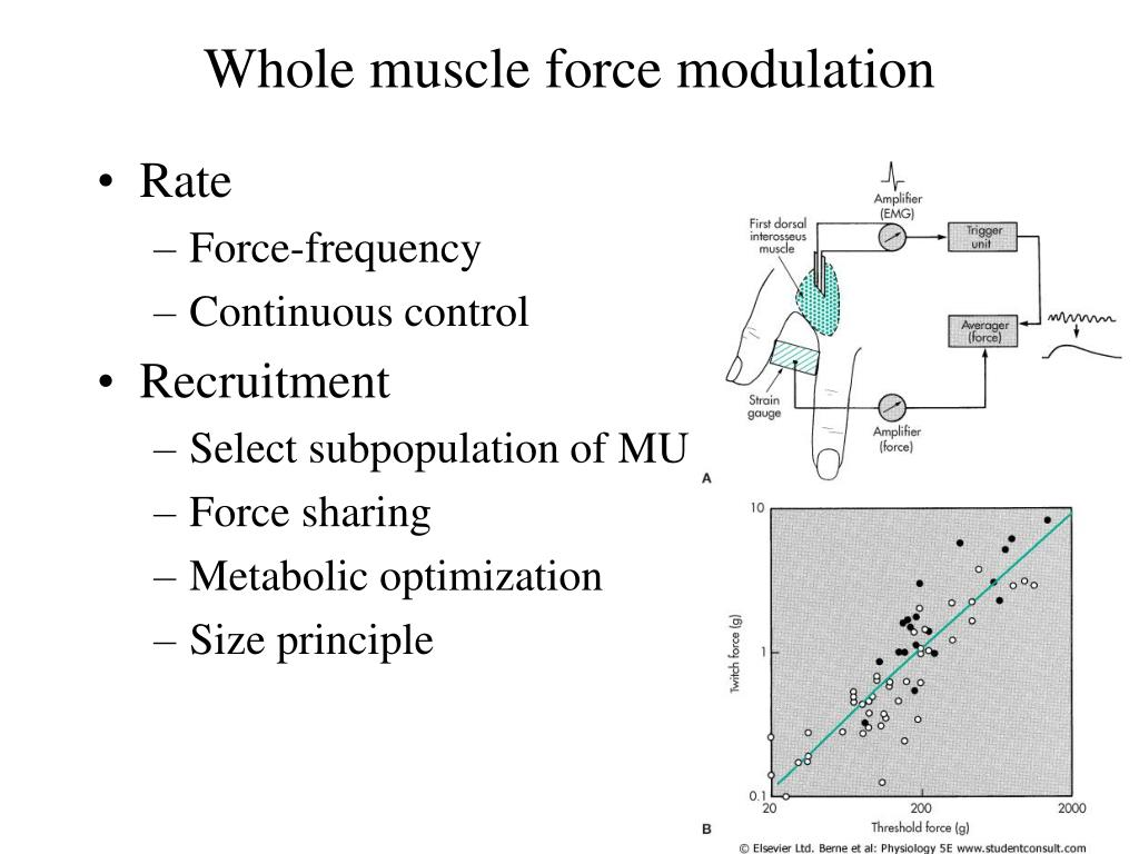 Whole muscle force modulation