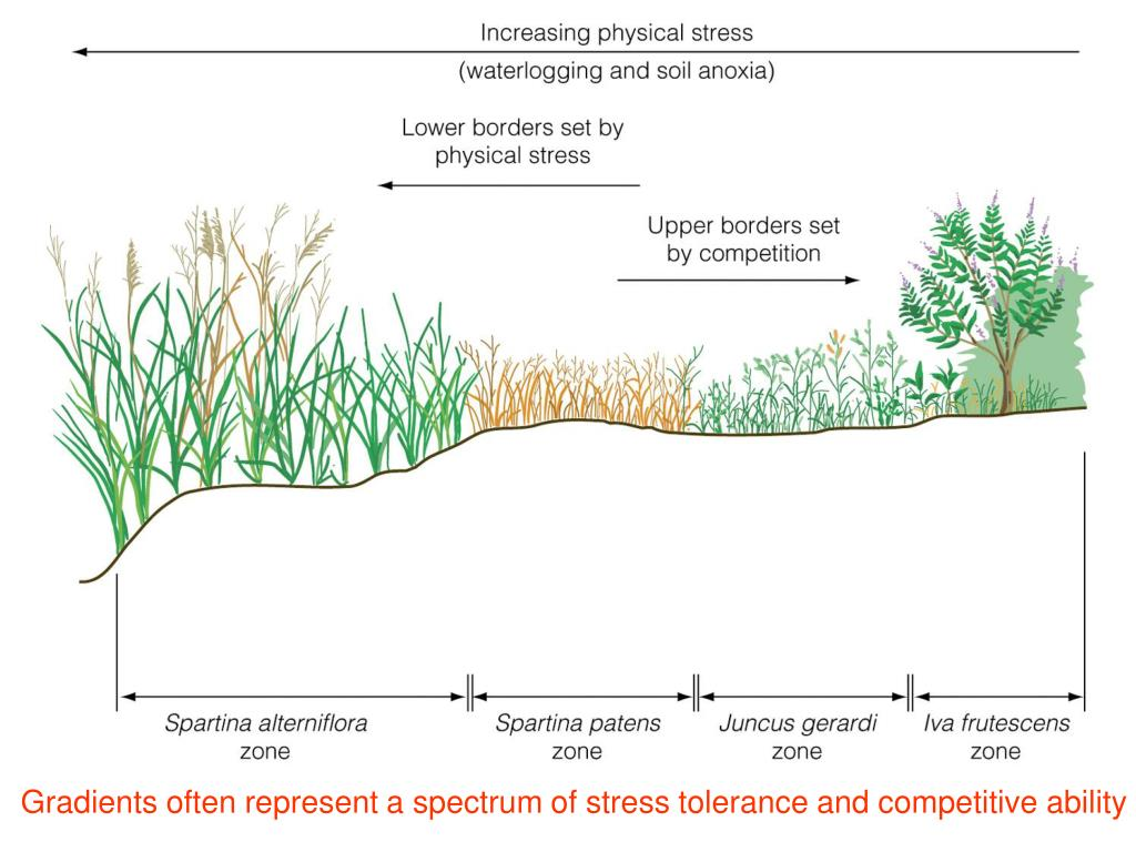 Gradients often represent a spectrum of stress tolerance and competitive ability