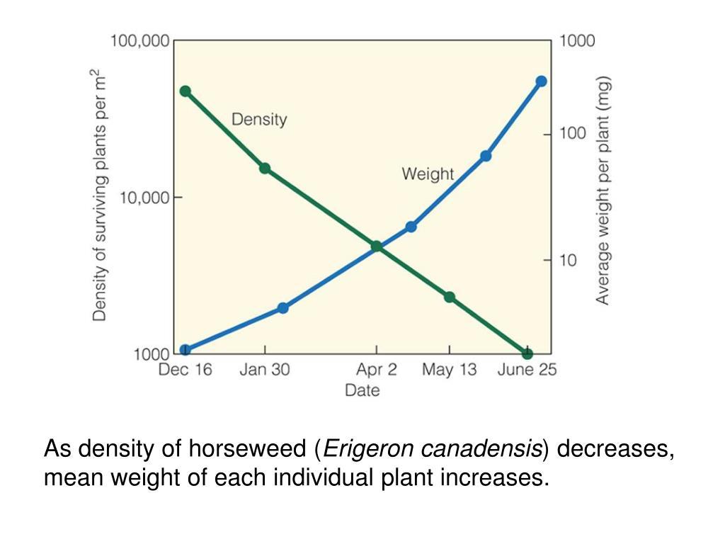 As density of horseweed (