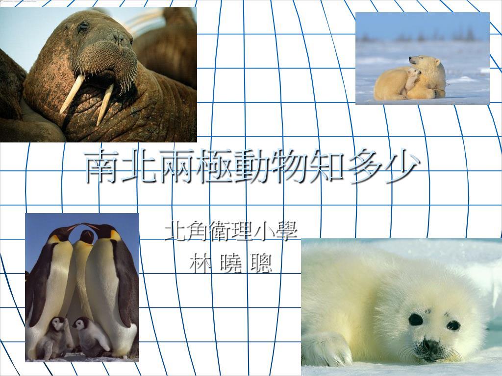 南北兩極動物知多少