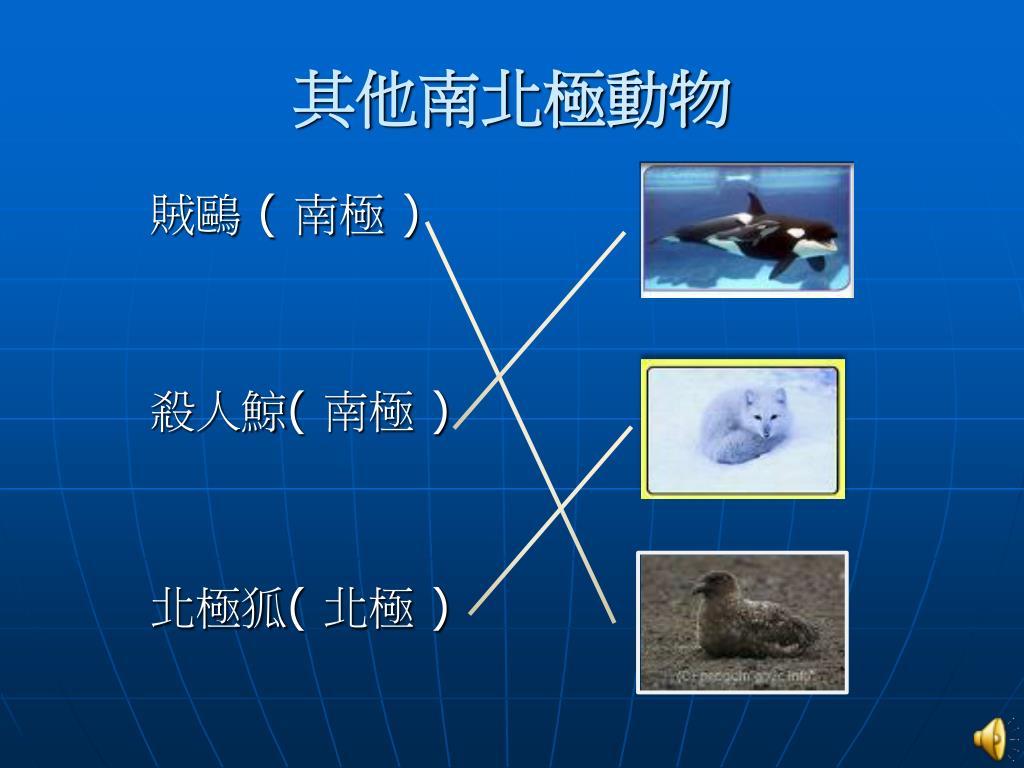 其他南北極動物