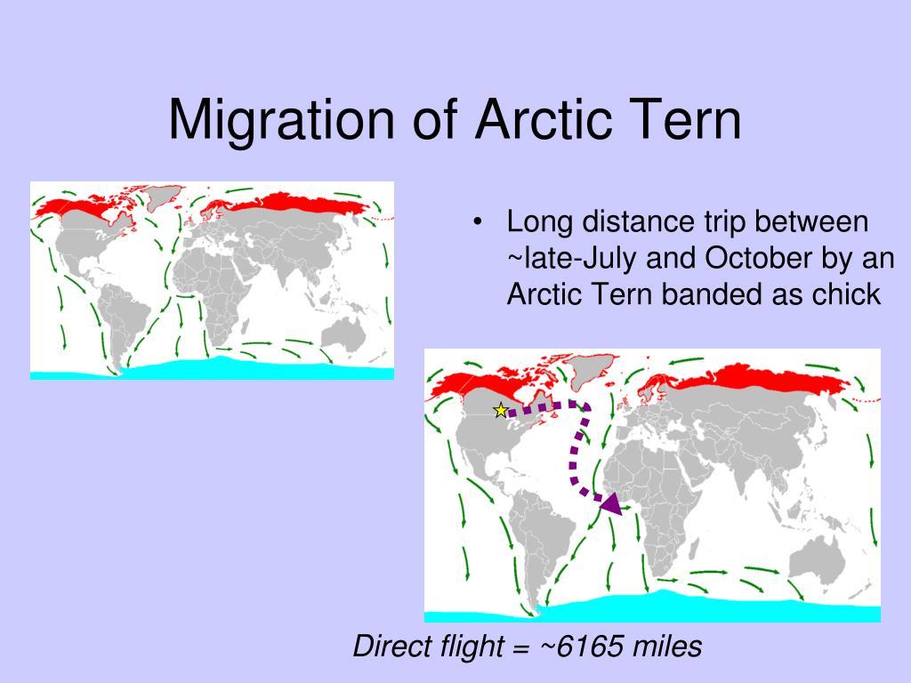 Long distance migrations