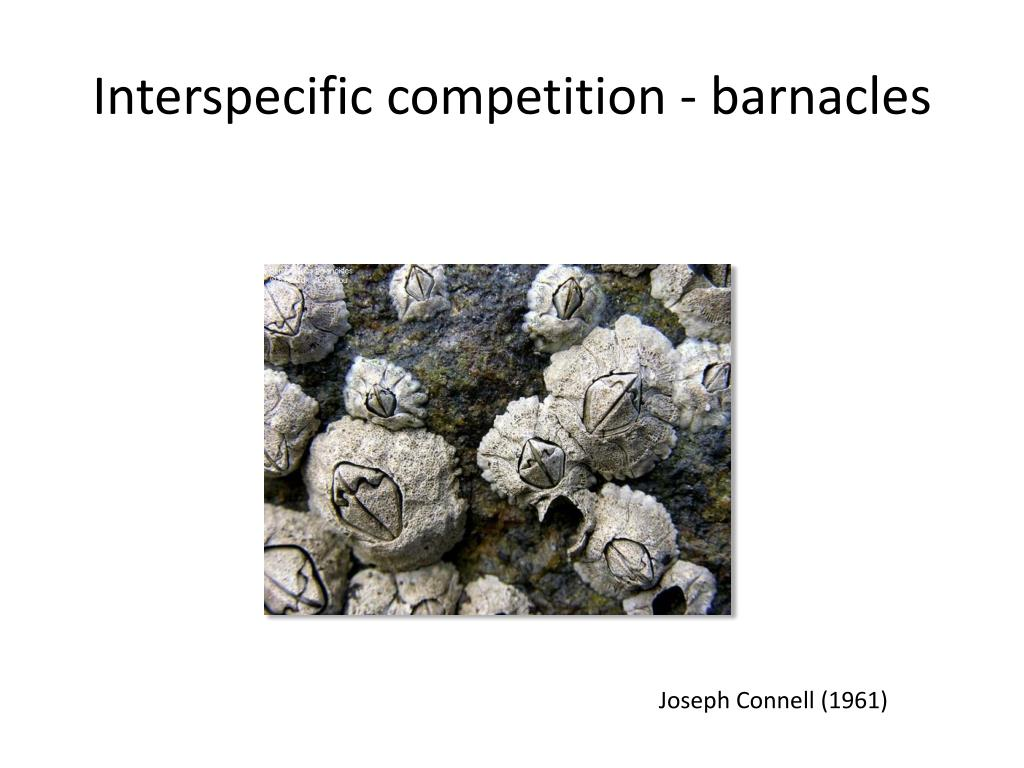 Interspecific competition - barnacles