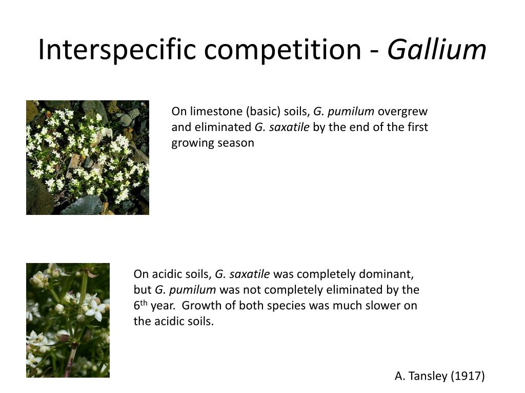 Interspecific competition -