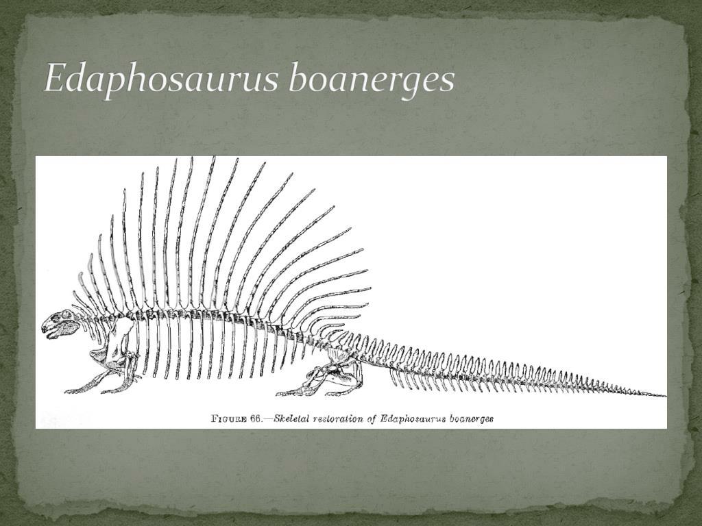 Edaphosaurus boanerges