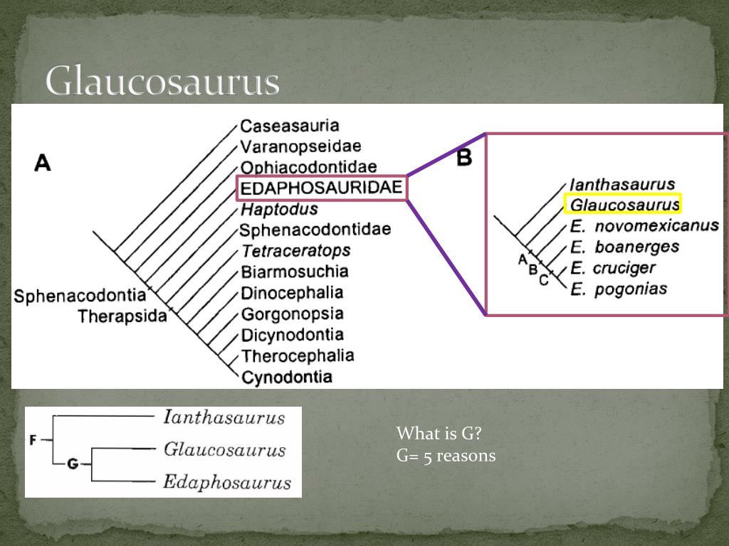 Glaucosaurus