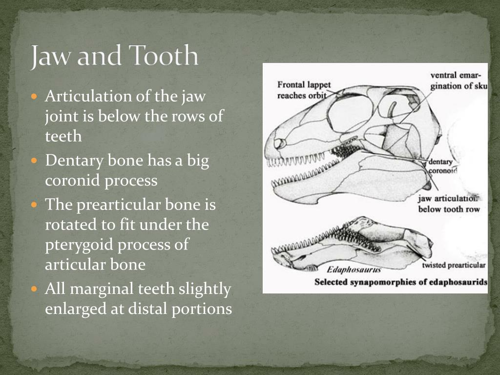 Jaw and Tooth