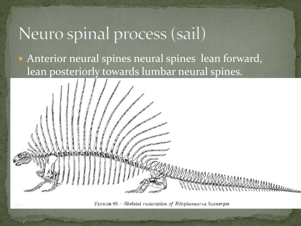 Neuro spinal process (sail)