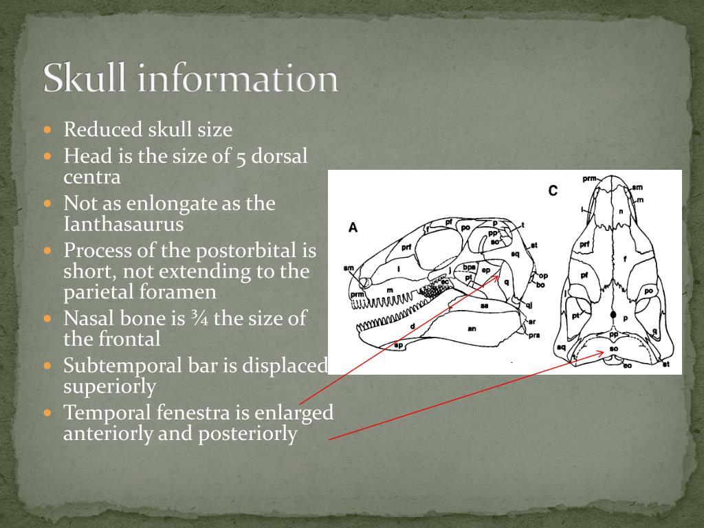 Skull information
