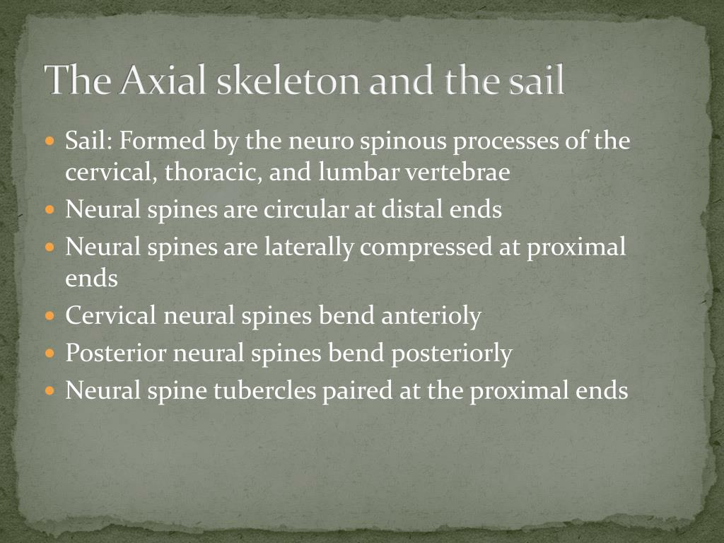 The Axial skeleton and the sail