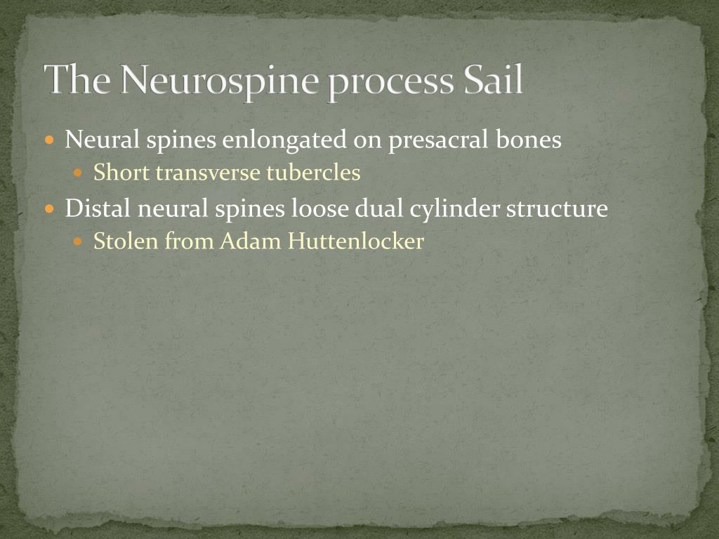 The Neurospine process Sail