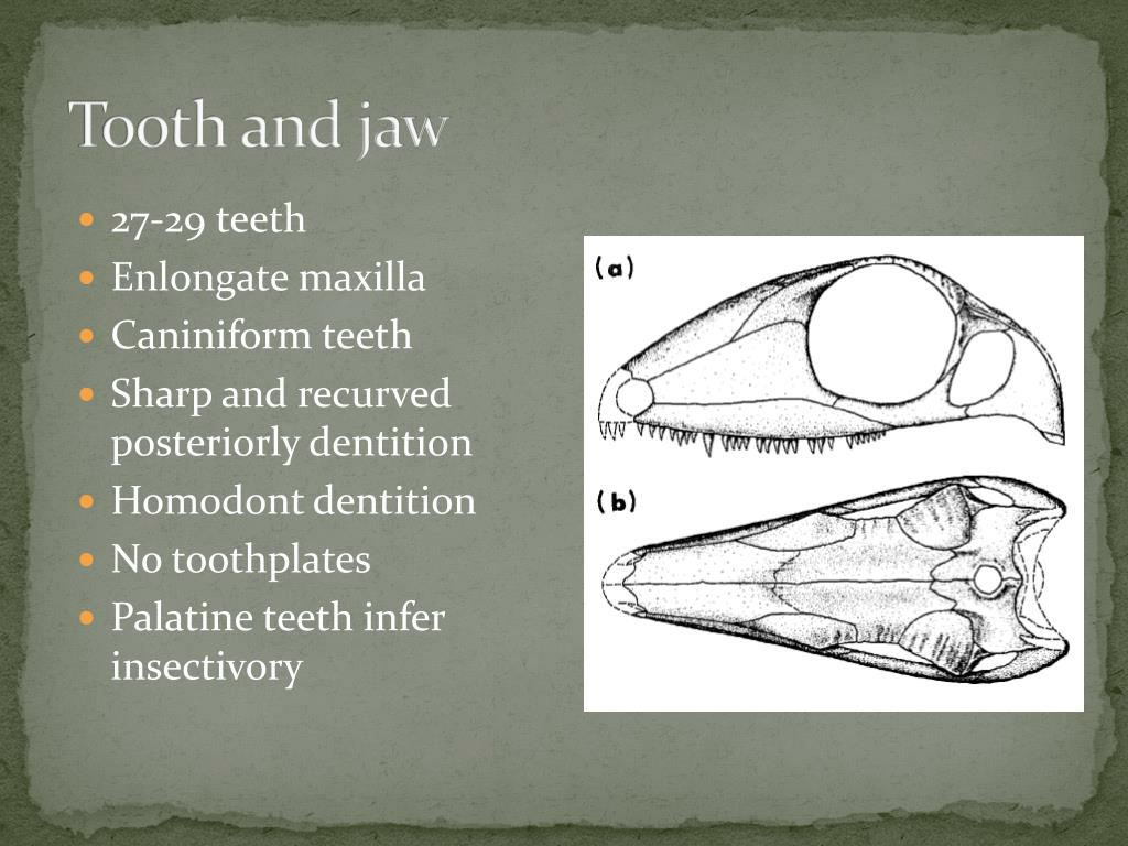 Tooth and jaw