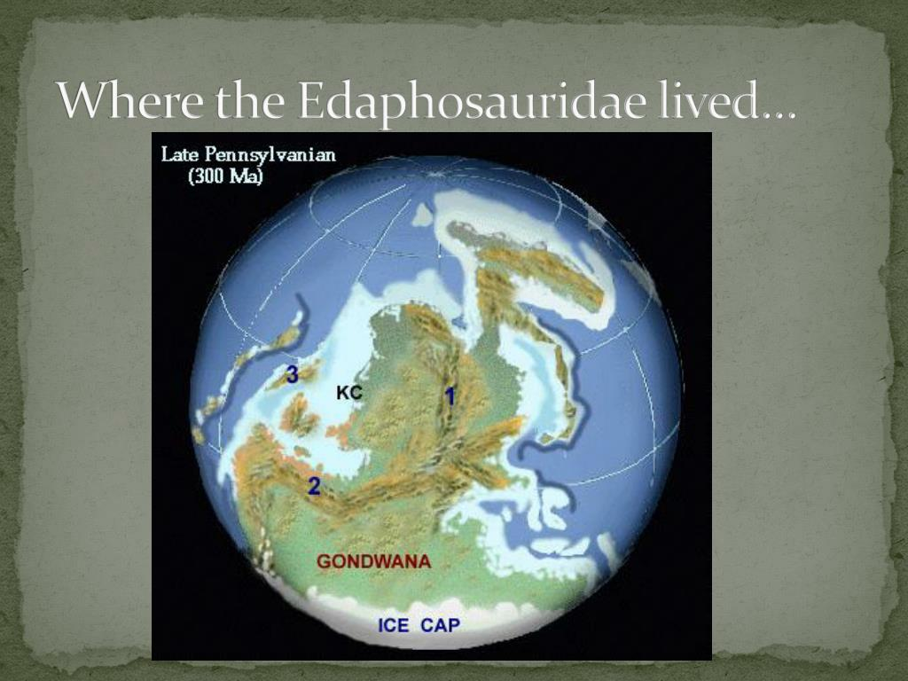 Where the Edaphosauridae lived