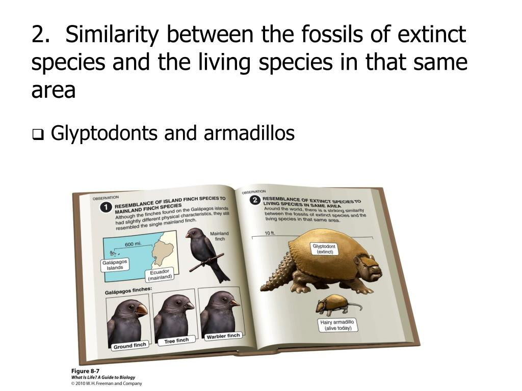 2.  Similarity between the fossils of extinct species and the living species in that same area
