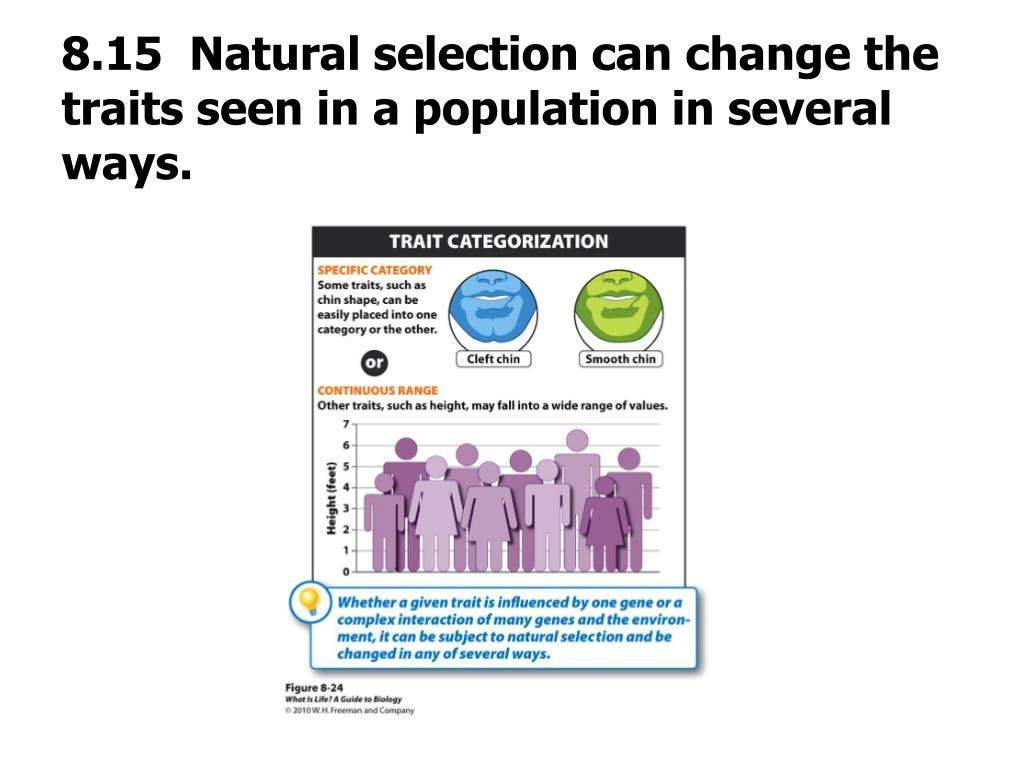 8.15  Natural selection can change the traits seen in a population in several ways.